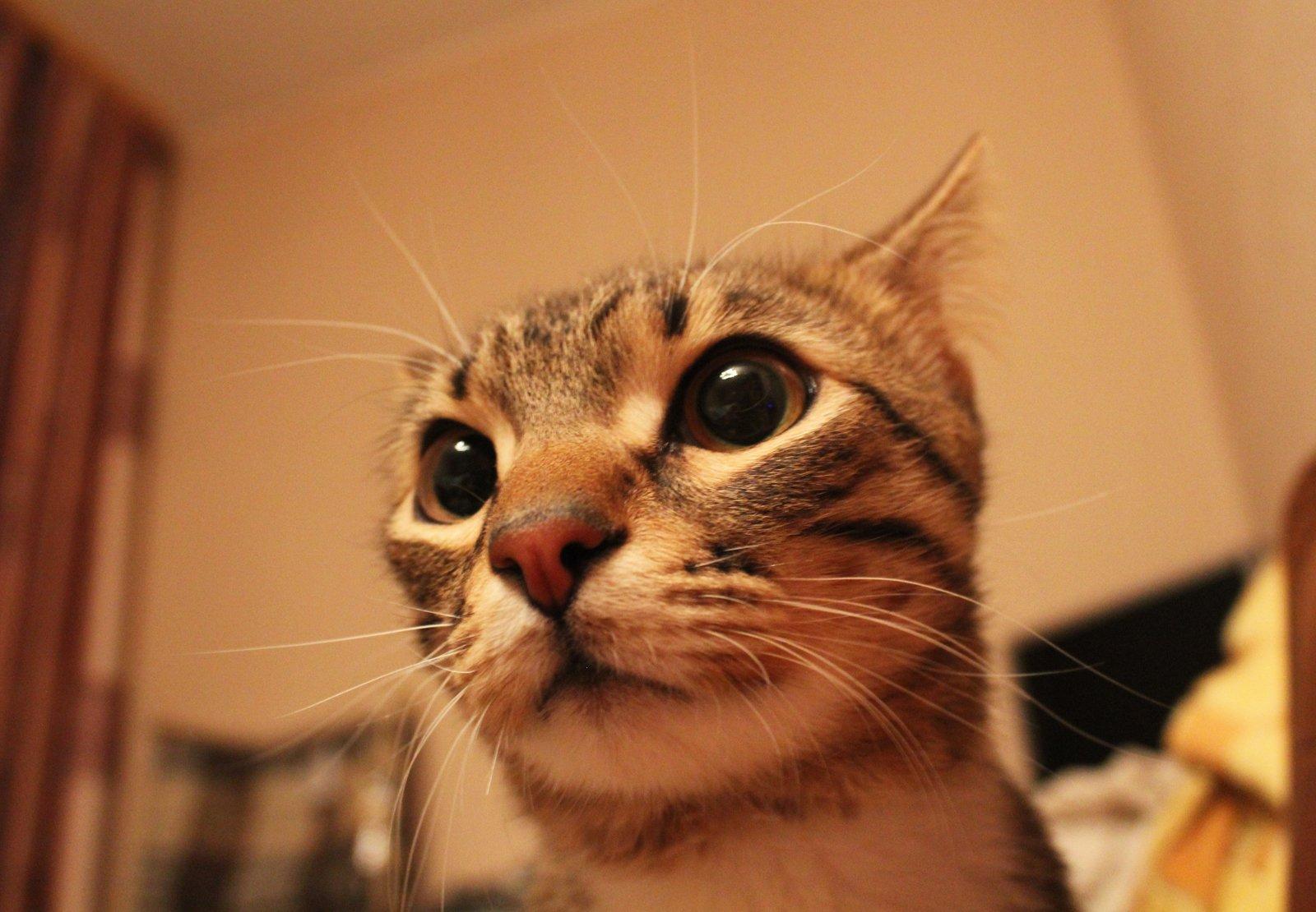 Котик мордочка
