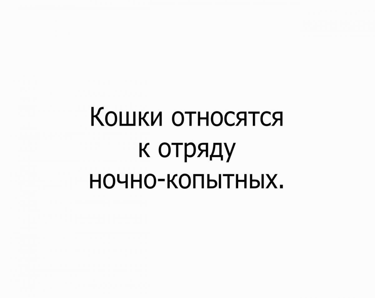 OPvFnwMLihM.jpg
