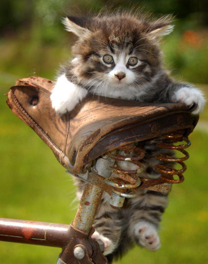 котик на велике.jpg