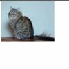 Кошка Васимошка